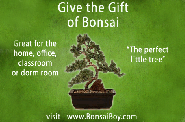 Bonsai Boy